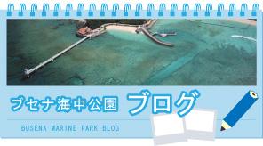 ブセナ海中公園ブログ